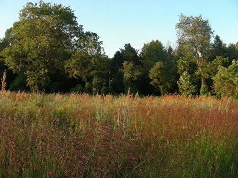 Indian-grass and Purple Top